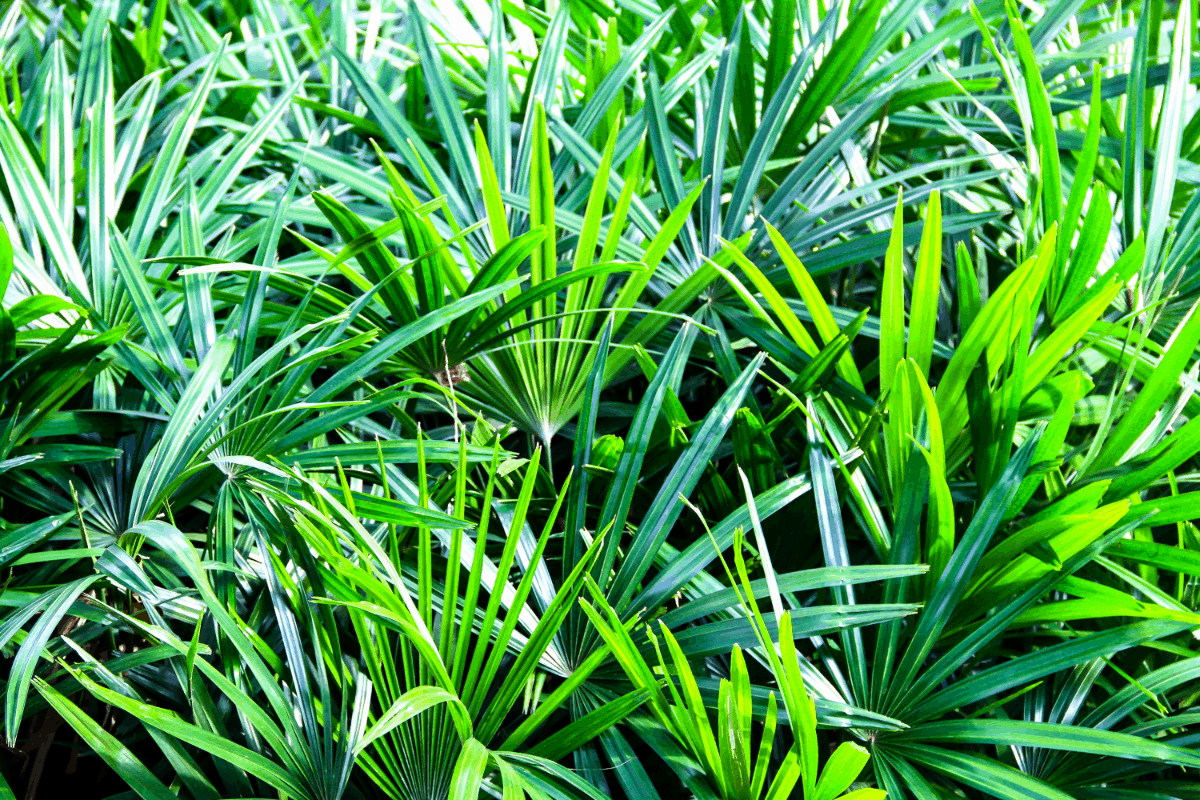 4-bamboo palm Best Air Purifying Plants NASA-approved